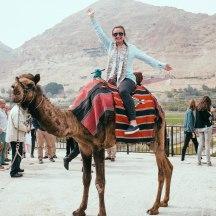 camel-6